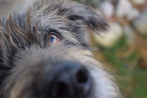 Herzlich Willkommen Auf Hundenaseinfo Hier Erfahren Sie Alles